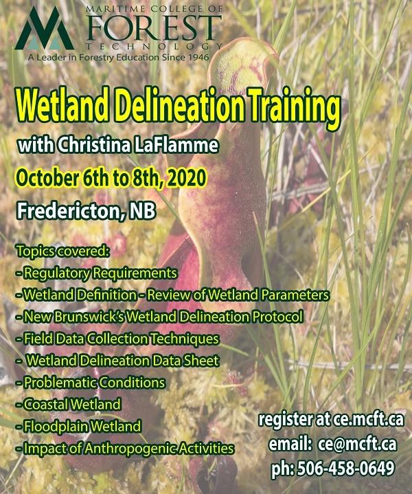 Wetland Delineation October 2020